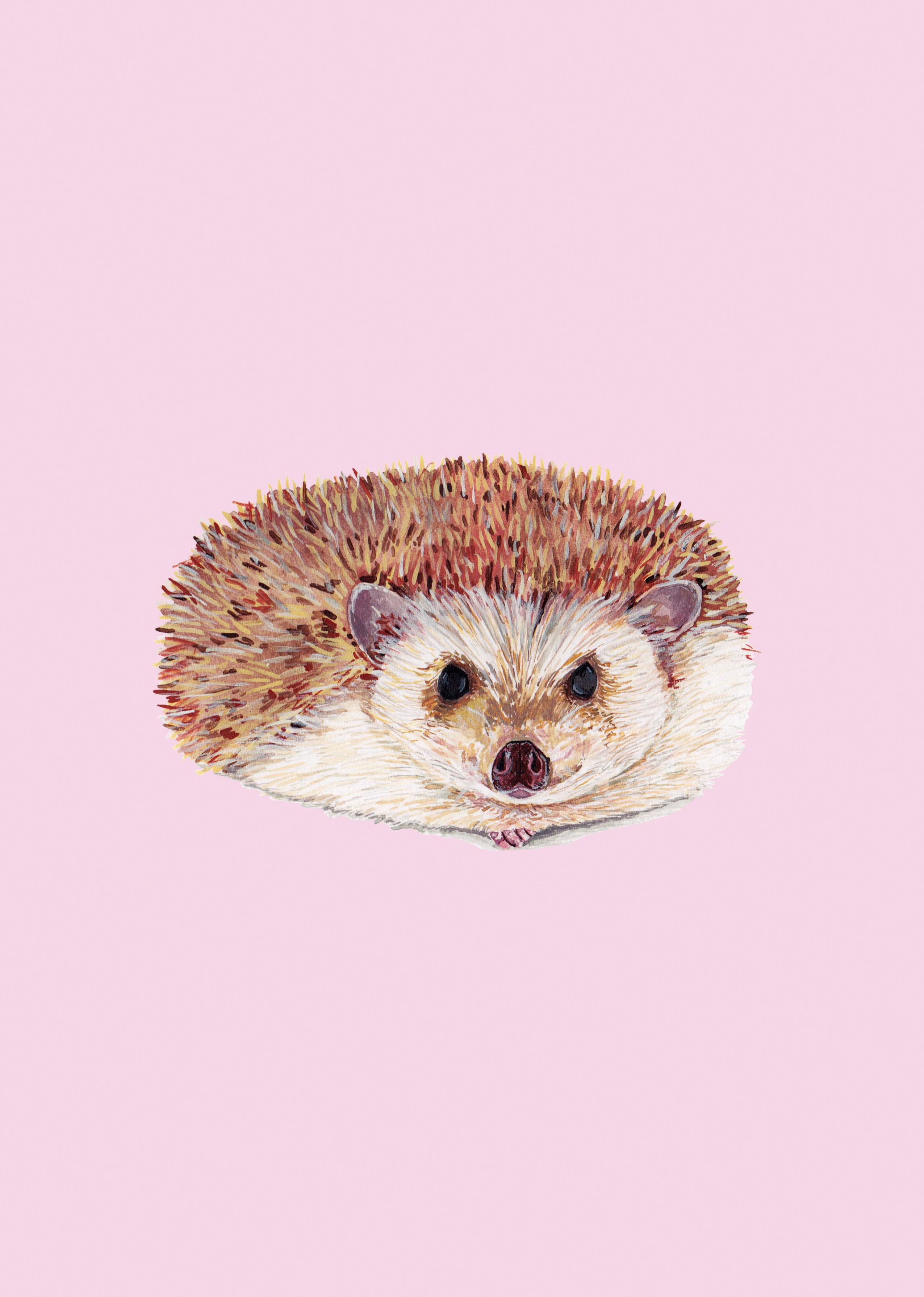 hedgehogwebsite
