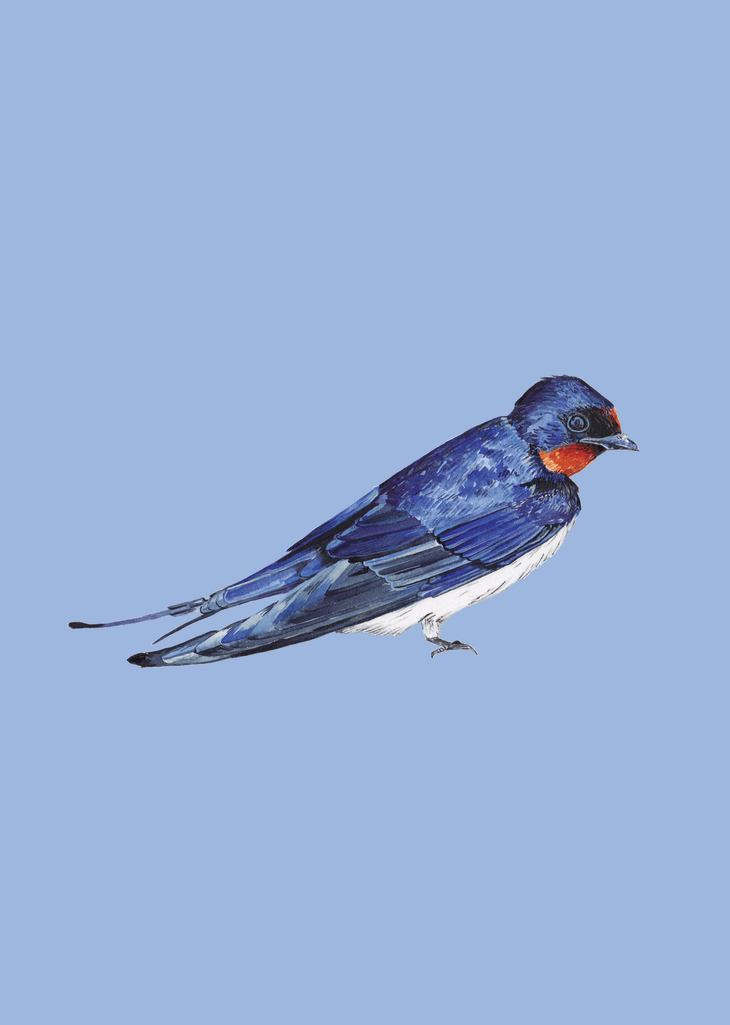 swallowbluewebsite