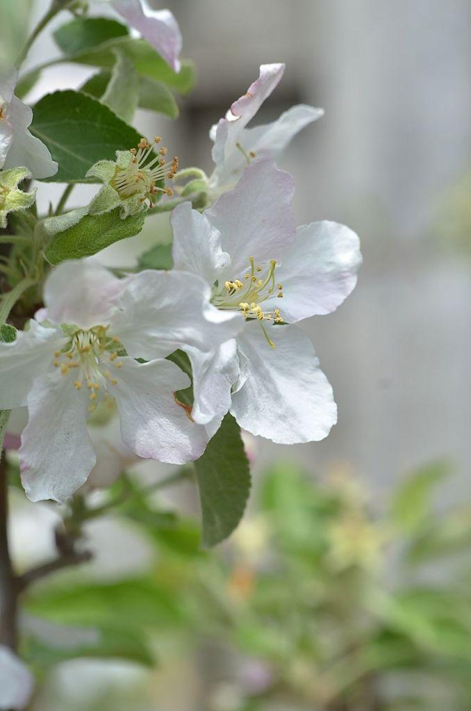 My Garden May 2014 - 04