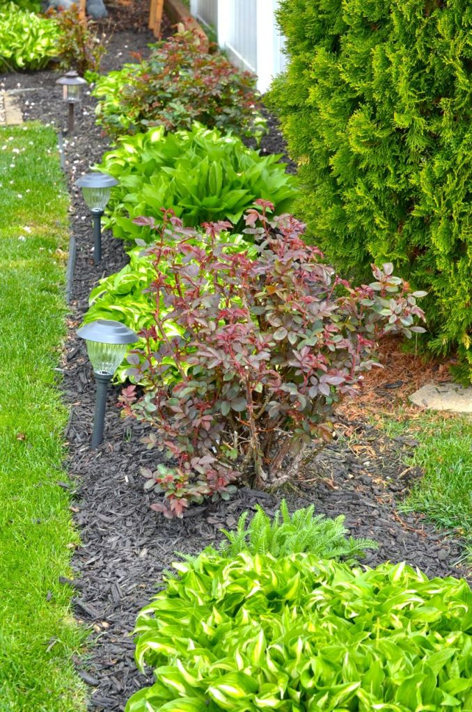 My Garden May 2014 - 19