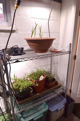 Indoor Garden - 5