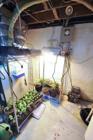 garden set-up