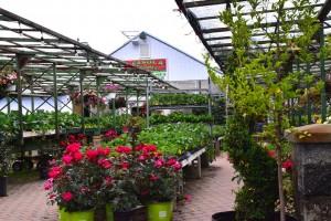 Casola Farms - 09