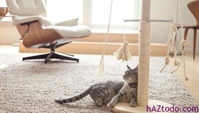 Cómo construir un rascador de gatos