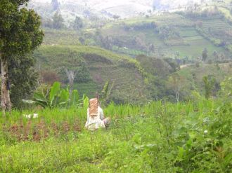 Karo woman in field (North Sumatra, 2004)
