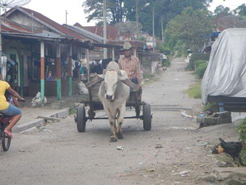 Man on cart (North Sumatra, 2014)
