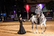 Flamenco with horse
