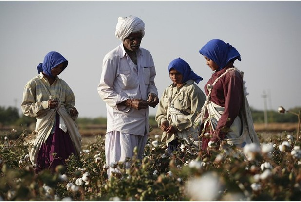 Fairtrade certified cotton farmers from Agrocel