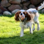Ball Rory