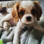Puppy Rory