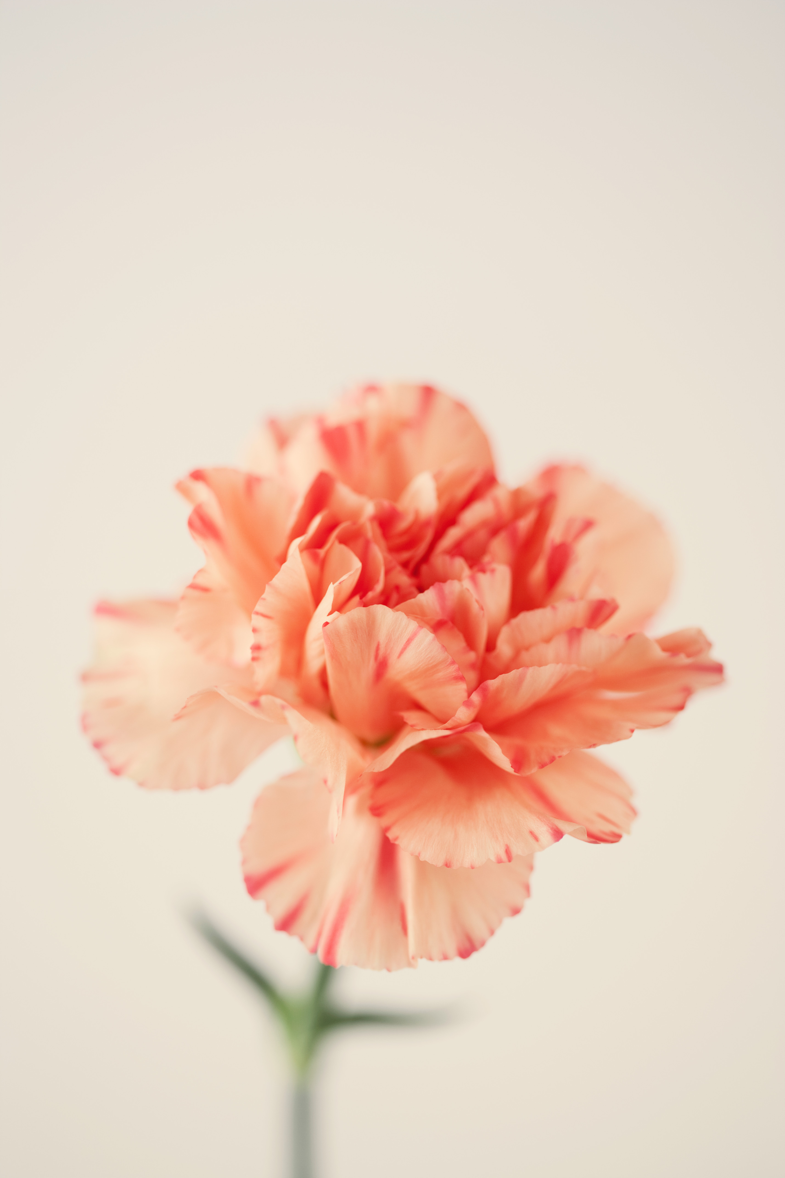 10 Flowers With Surprising Meanings Meanings Of Flowers