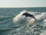dolphins, vacations, awesome white beach, snorkeling, scuba diving, vacation trips, ideas, deals