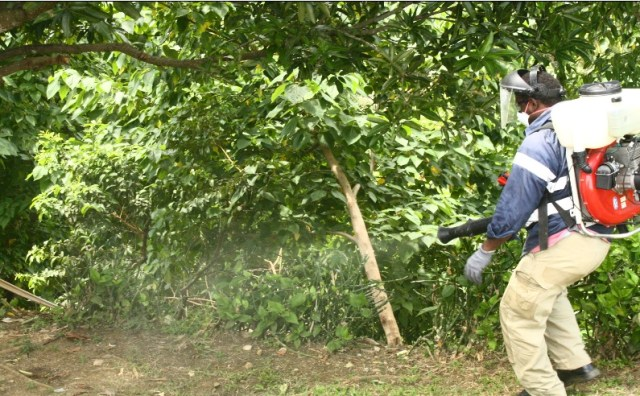 Spraying to prevent the spread of Dengue.