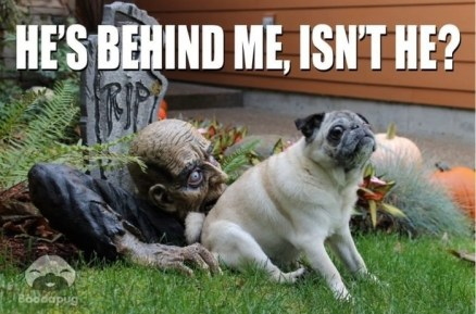 Halloween-Meme-Funny-3