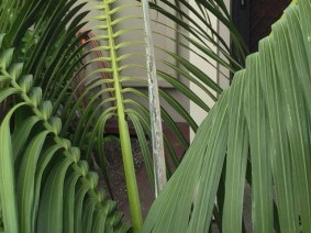 Another palm