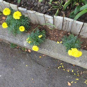 We look at the marigolds
