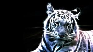 3d Desktop Tigers Picture