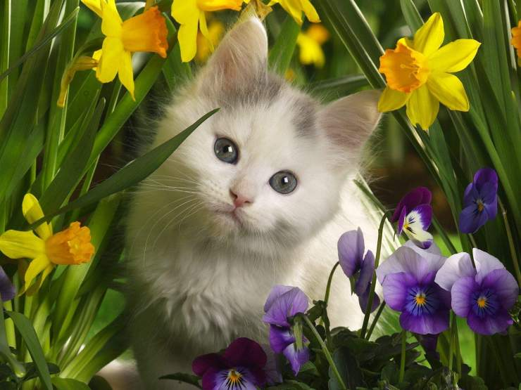 Cat Hide Behind The Flowers