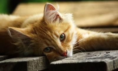 Cat Kittens 1080x1920