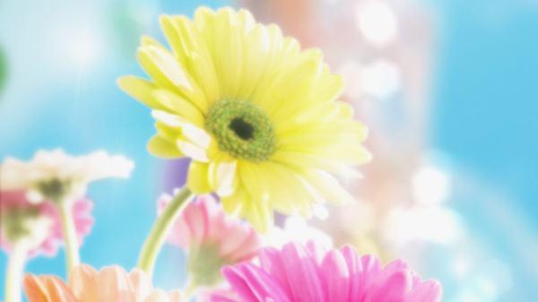 Flower Laptop Backgrounds Get