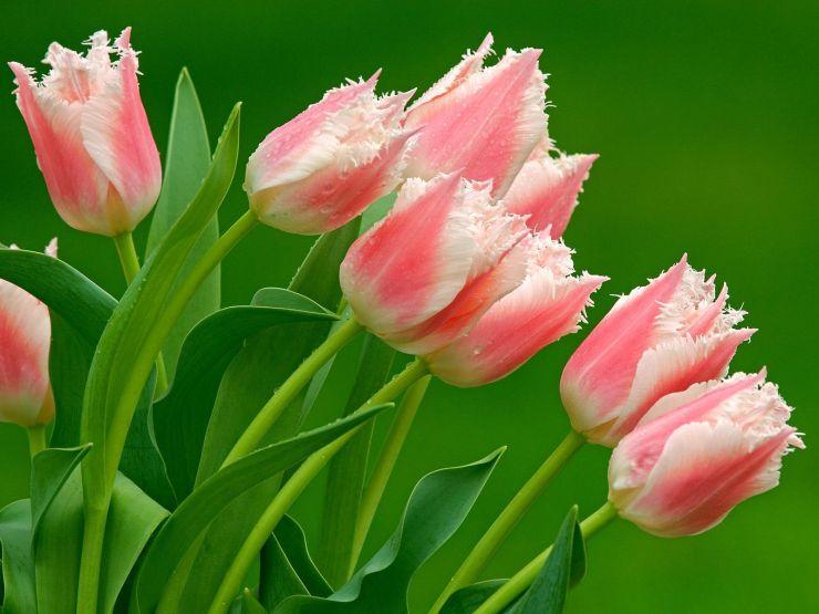 Flower Pics Get