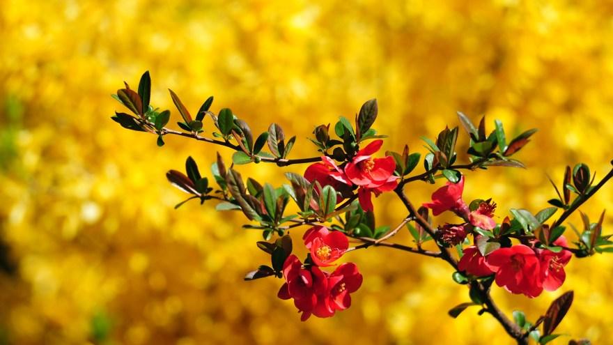 Flower Pictures Wallpaper Get