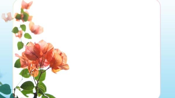 Flower Wallpaper Border Get