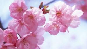 Flower Wallpaper In Hd Get