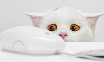 White Cat Looking At Something