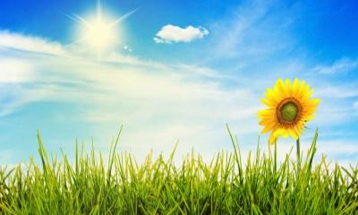 35806508 sunny pic