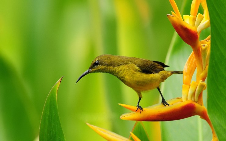 Beautiful pictures of birds download hd
