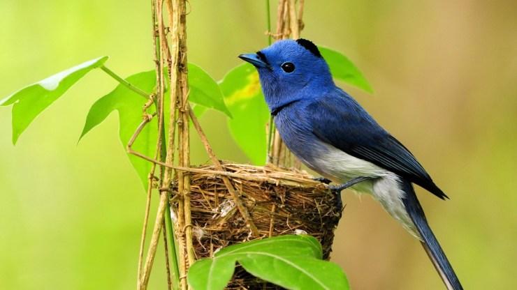 Bird wallpaper hd background desktop