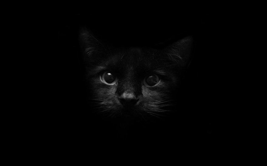 Black+Cat+Wallpapers