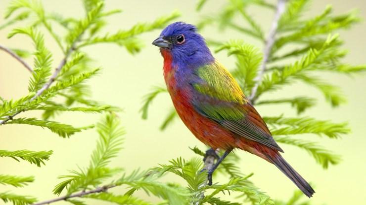 beautiful bird sitting on branch hd bird animal