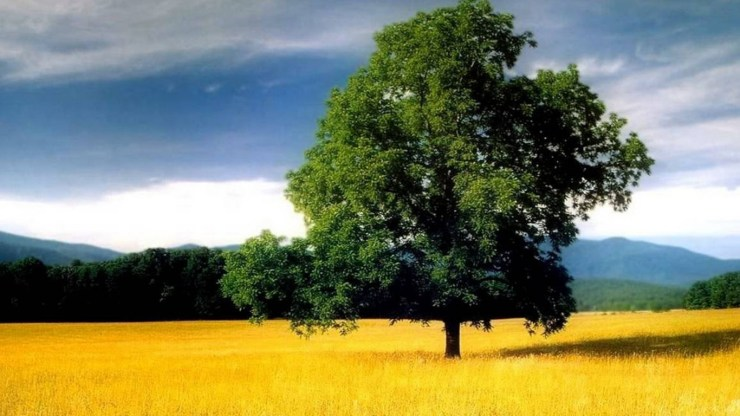 cool nature wallpapers 45332