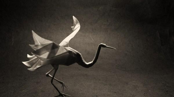 crane bird wallpaper (21)