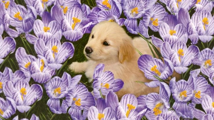 cute wallpapers 226590