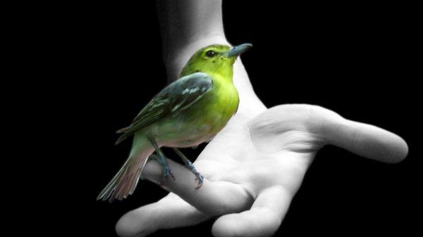 bird wallpaper desktop