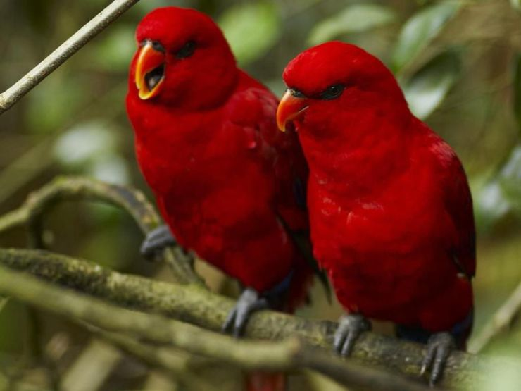 birds hd wallpaper for desktop