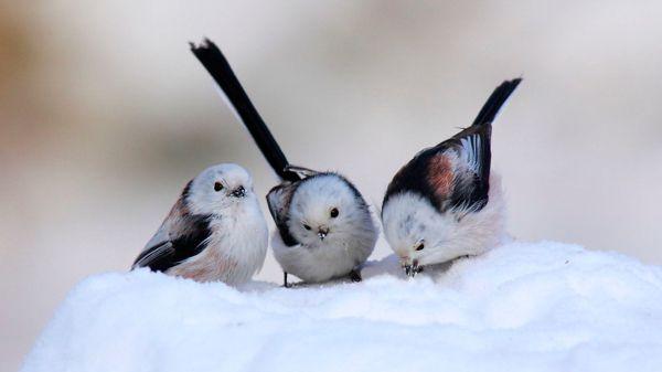 desktop bird wallpaper