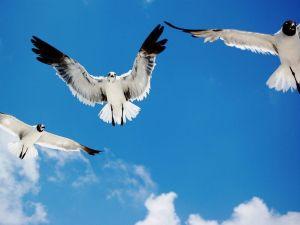 flying birds wallpaper