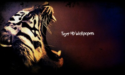 Tiger Featured Wallpaper
