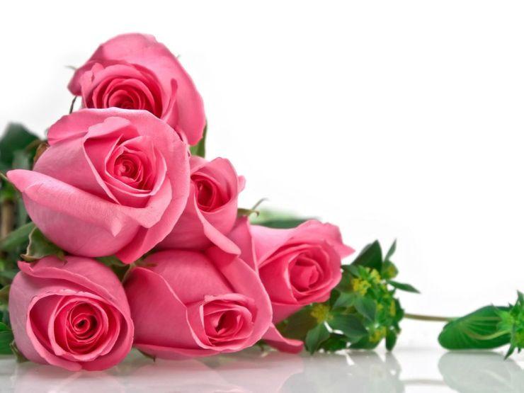 cool pink rose wallpapers