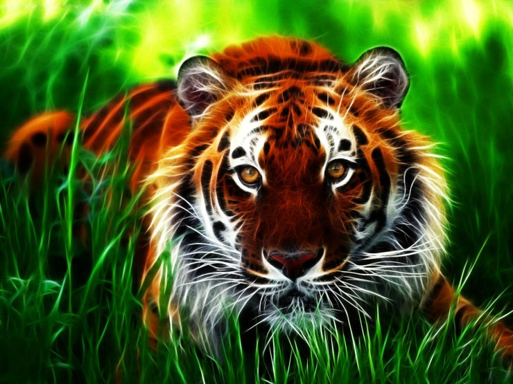 picture of tigers to color