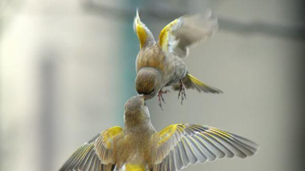 beautiful birds wallpaper free download