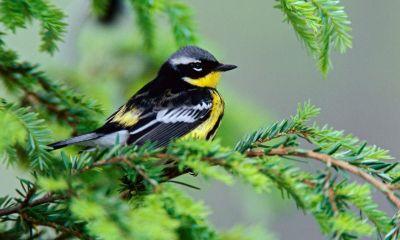 birds hd wallpaper download