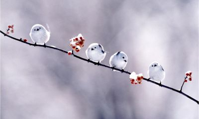 birds images free download