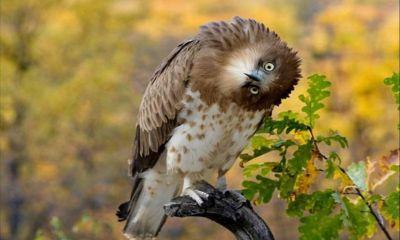 birds of prey wallpaper