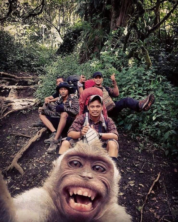 Monkey Selfie Photo
