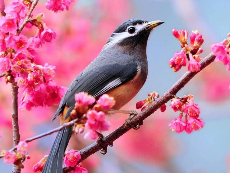 HD Spring flowers desktop wallpaper desktop 1600p